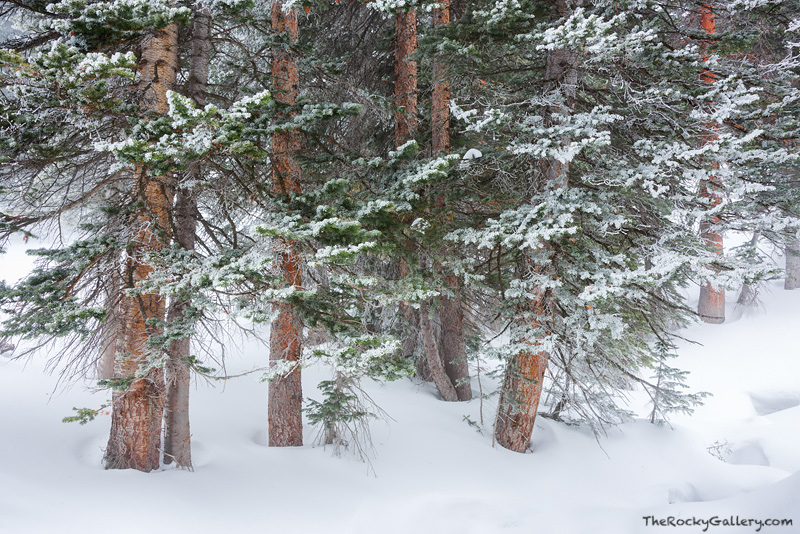 Dream Lake,Bear Lake,Trailhead,Snow,Winter,January,Ice,Trees,RMNP,Estes Park,Bear Lake Road,Rocky Mountain National Park,Colorado,Landscape,Photographer,January,Tyndall Creek, photo