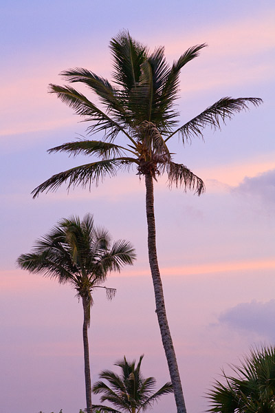 A beautiful pastel sunset amongst the Palm trees along the shores of Elbow Beach, Bermuda