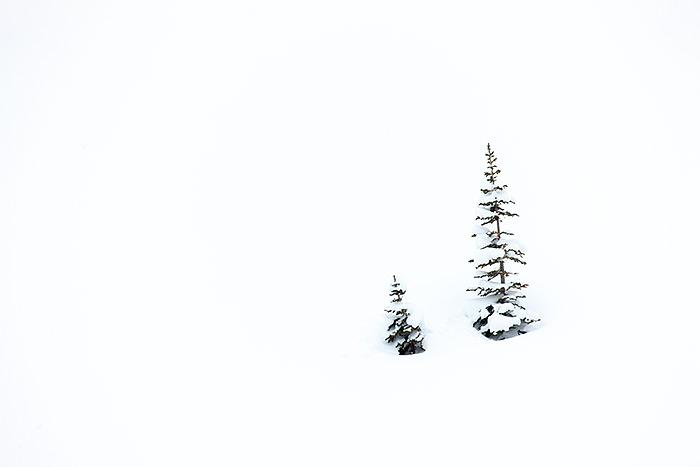 Rocky Mountain National Park, Colorado,trees,Hallet Peak,Emerald Lake,snow, photo