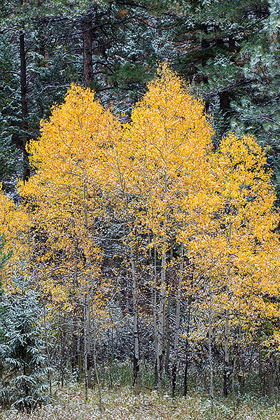 Colorado,Fall,Autumn,Boulder,Aspens,Snow,Ponderosa's,meadow,open space, photo