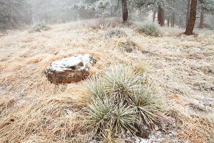 Boulder, Colorado, Open Space, Flagstaff Mountain, Winter, Snow, OSMP, photo