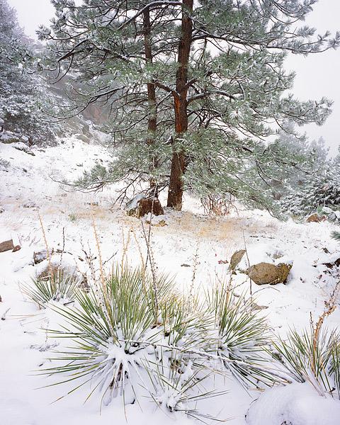 Colorado, Boulder, Flagstaff Mountain, Open Space, Yucca's, OSMP, photo