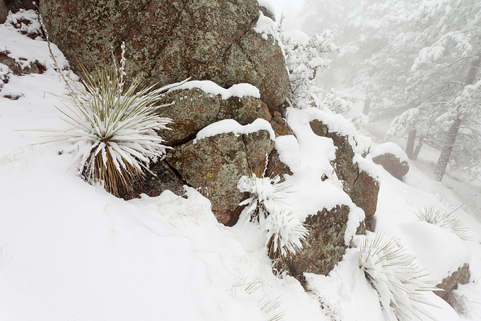 Boulder, Colorado, Flagstaff Mountain, Yucca's, Winter, Open Space, OSMP, photo