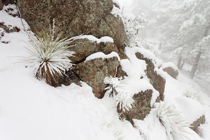 Boulder, Colorado, Flagstaff Mountain, Yucca's, Winter, Open Space, OSMP, photo