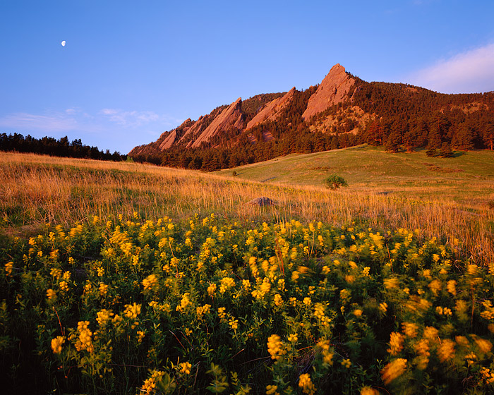 Chautaugua Park, Boulder, Golden Banner, Wildflowers, Flatirons, OSMP, Open Space, photo