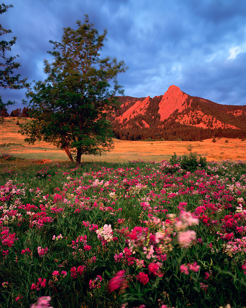Flatirons, Chautaugua Park, Boulder, Wildflowers, Colorado, Open Space, OSMP, photo
