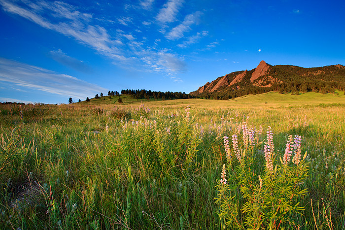 The Moon is viewed setting over the Flatiron formation in Boulder, Colorado. Silver Lupine grow in the meadow of the iconic Chautauqua...