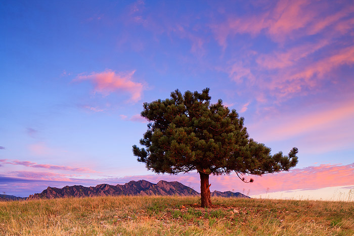 Boulder,Colorado,Open Space And Mountain Parks,Tree,Wind,Flatirons , photo