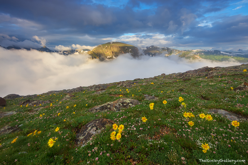 Tundra,Alpine,Landscape,Photography,RMNP,Trail Ridge Road,Hayden Spire,Mount Julian,Terra Tomah,Mountain,Rocky Mountain National Park,Colorado,Estes Park,Grand Lake,Wildflowers,Fog,Canyon,Forest,Sunri, photo