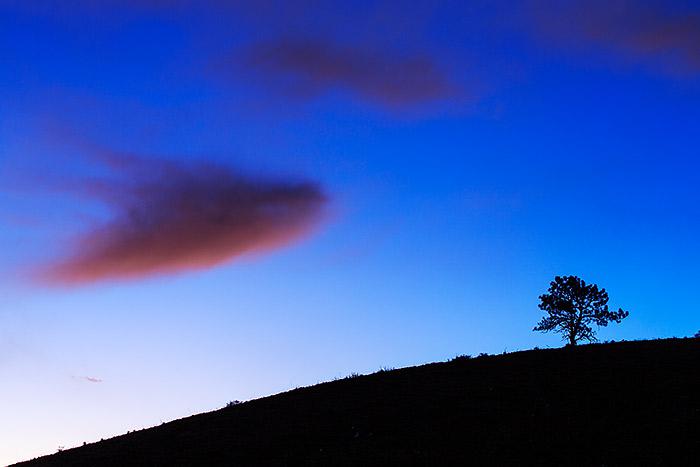 Boulder,Colorado,Open Space,Four Mile Creek,Sunrise,Tree,Pine,Ponderosa , photo