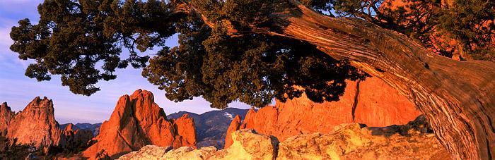 Garden of the Gods, Colorado Springs, One Seed Juniper, Mountains, photo