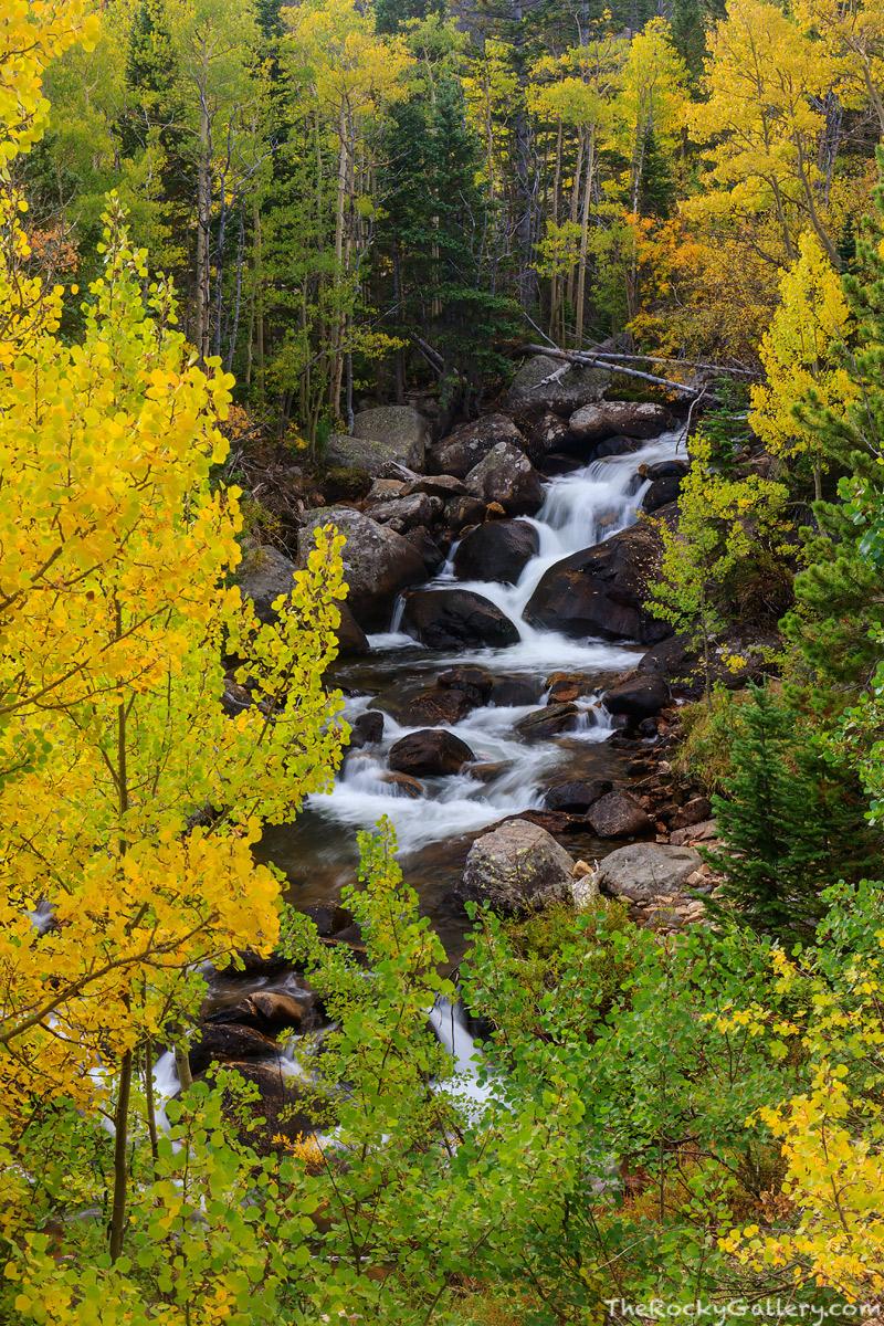 Glacier Creek,Fall,Autumn,Aspens,Golden,RMNP,Estes Park,Glacier Gorge,Trail Head,Bear Lake Road,Rocky Mountain National Park,Colorado,Landscape,Photography, photo