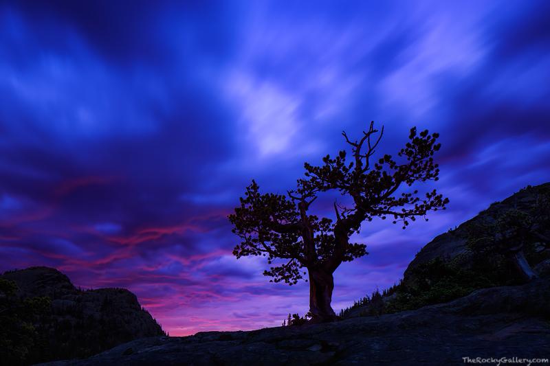 Glacier Gorge,Glacier Knobs,Rocky Mountain National Park,Colorado,Krumholtz,tree,sunrise,blue,sillhouette,Estes Park,RMNP,Landscape,Photography,Trailhead,Bear Lake Road, photo