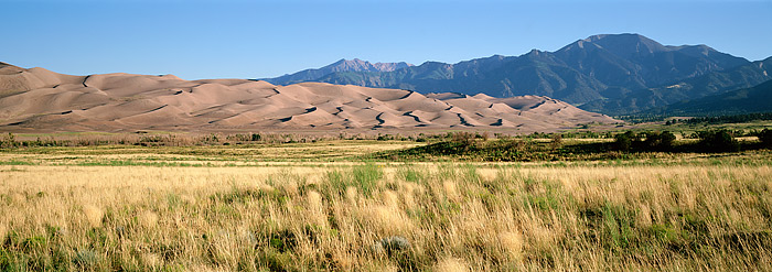 Colorado, Great Sand Dunes, Grasses, Sunflowers, National Monument, photo