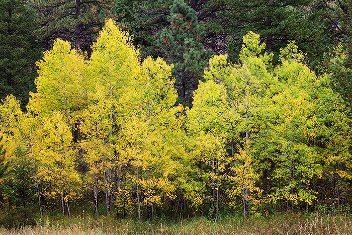 Boulder,Colorado,Aspen,Fall,Gregory Canyon,Open Space and Mountain Park, photo