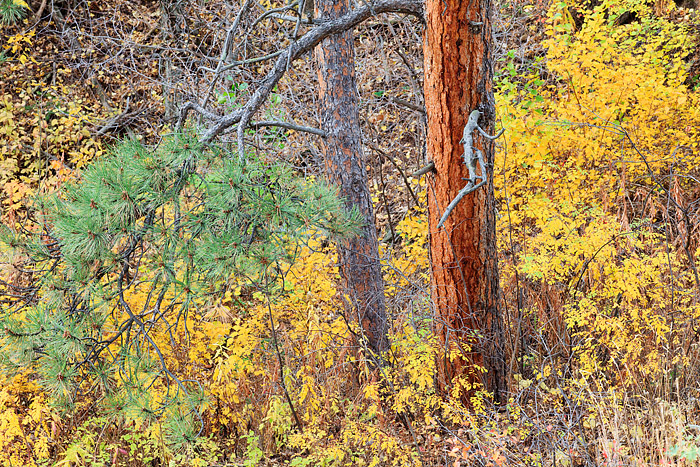 Boulder, Colorado, Fall Color, Gregory Canyon, Open Space, OSMP, photo