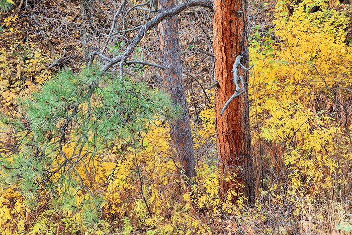 Boulder, Colorado, Fall Color, Gregory Canyon, Open Space, OSMP, photo