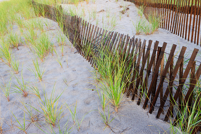 Southampton, New York, Halsey Neck, Beach, Dunes, Fences, Grasses, photo