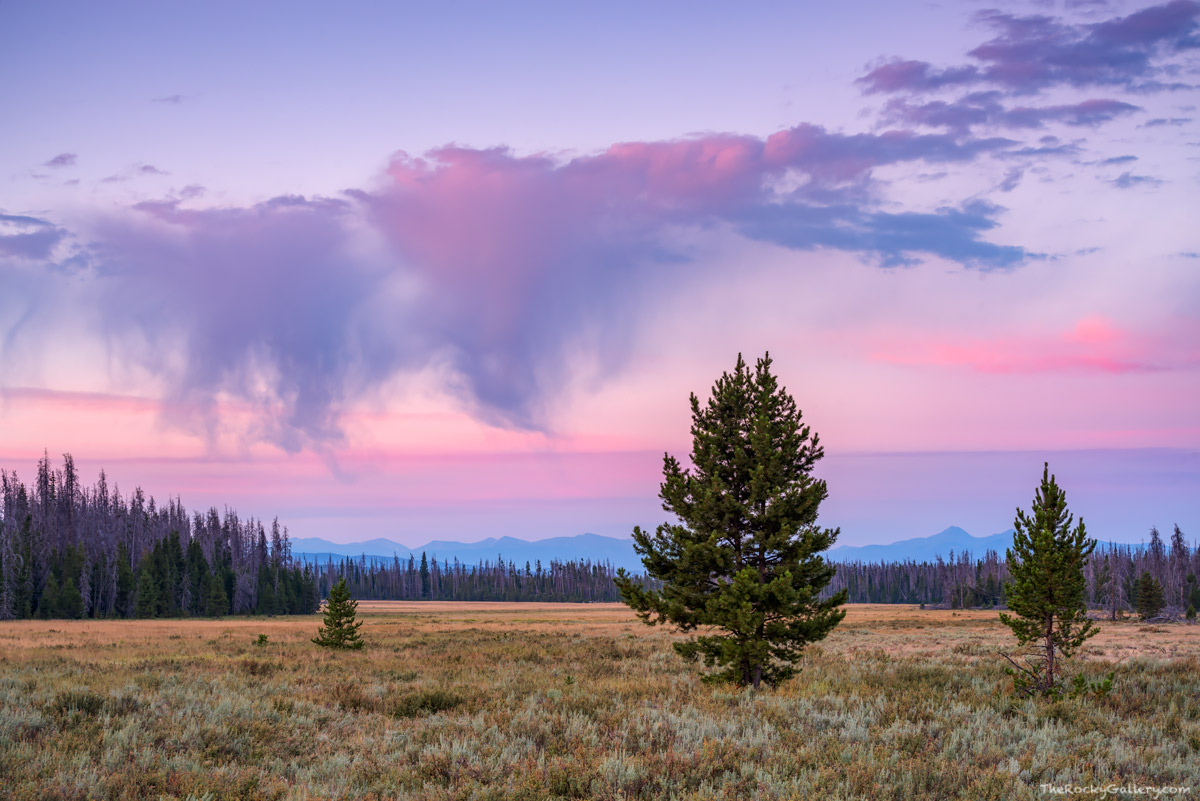 Harbison Meadow,Annie,Kitty,Sisters,Homestead,Colorado,RMNP,Grand Lake,Trail Ridge Road,Sunrise,August,Sage,Rocky Mountain National Park,Colorado,Landscapes,West Side, Kawuneeche Valley,Gore Range, photo