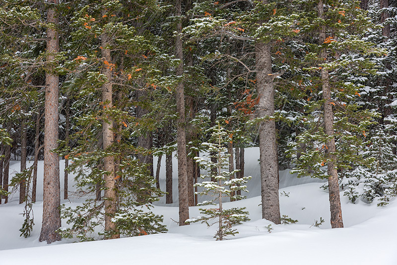 Hidden Valley,Trail Ridge Road,Estes Park,RMNP,Rocky Mountain National Park,Snow,Winter,March,Trees,Pines,Landscape,Photography,Colorado,Ski,Skiing,Sledding, photo