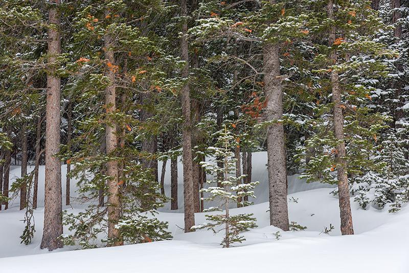 Hidden Valley,Trail Ridge Road,Estes Park,RMNP,Rocky Mountain National Park,Snow,Winter,March,Trees,Pines,Landscape,Photography,Colorado,Ski,Skiing,Sledding, photo