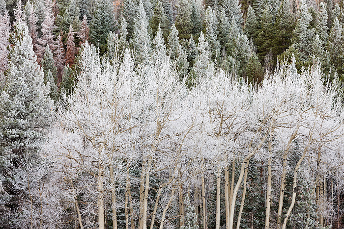 Hidden Valley,snow,rime ice,Rocky Mountain National Park,Colorado,aspen,spruce,trees, photo