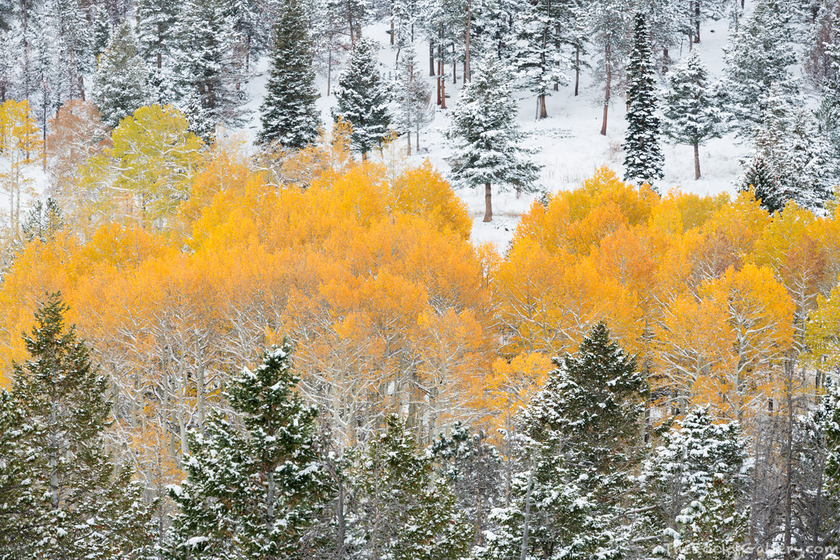 Horesehoe Park, Rocky Mountain National Park,Colorado,RMNP,Aspens,Fall,Autumn,October,Pines,Snow,Winter,Seasons,Landscape,Photography,Trail Ridge Road,Storm,Estes Park, photo
