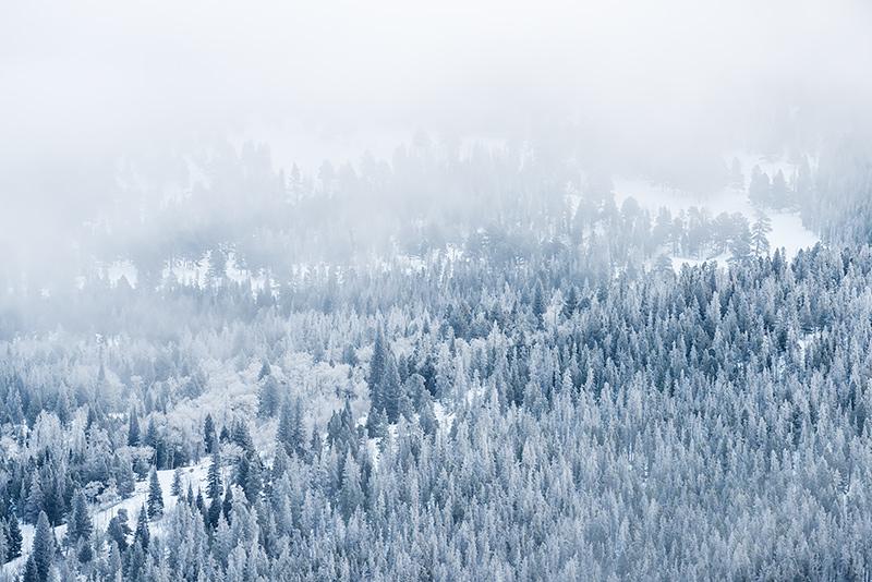 Rocky Mountain National Park, Colorado,Trail Ridge Road,Horseshoe Park,Winter,Storm,Snow,frosted,RMNP,Estes Park,pines,trees, photo