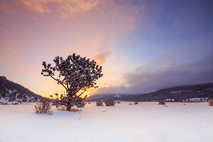 Horseshoe Park,Rocky Mountain National Park,Colorado,Tree,Deer Mountain,Sunrise,Landscape,Snow,Fog, photo