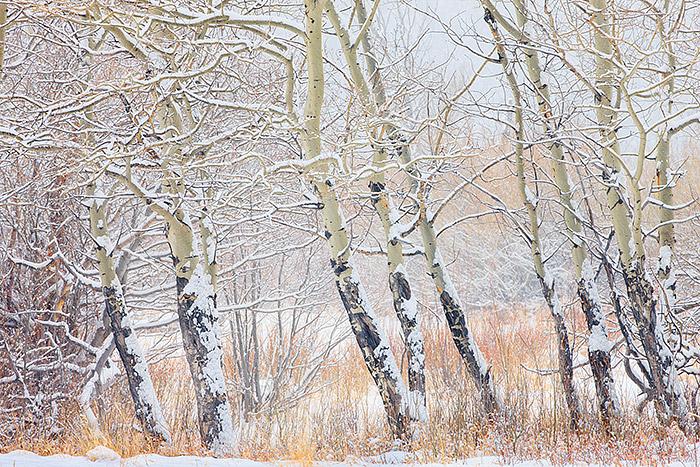 Colorado,Rocky Mountain National Park,Horseshoe Park,Aspens,Winter,Snow,willows, photo