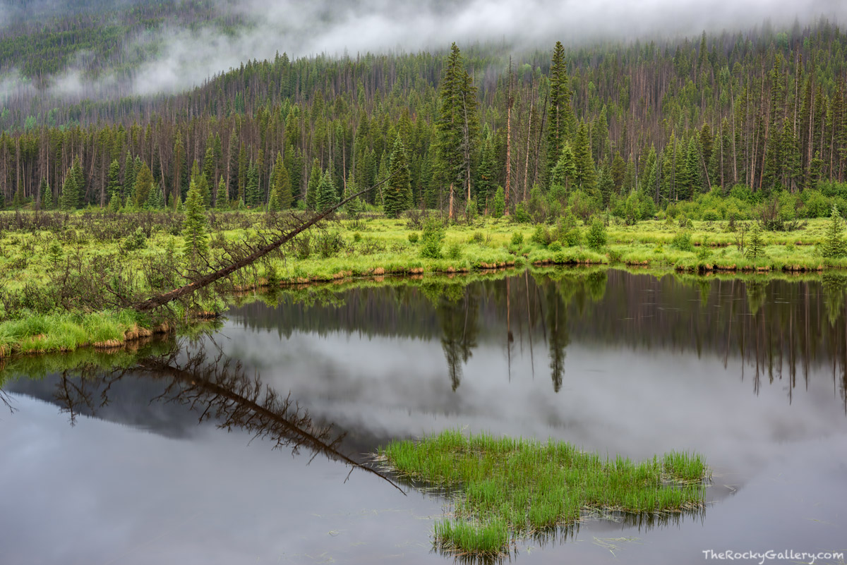 Beaver Ponds,West Side,Grand Lake,Trail Ridge Road,RMNP,Colorado,Rocky Mountain National Park,July,Fog,Landscape,Photography,Kawuneeche Valley , photo