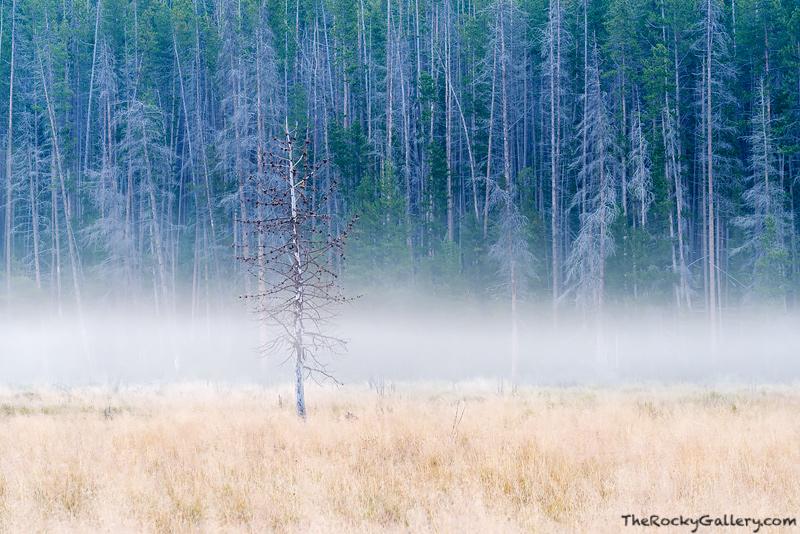 Rocky Mountain National Park, Colorado,Landscape,Photography,West Side,RMNP,Grand Lake,Trail Ridge Road,Moose,Trees,Fog,Kawuneeche Valley,morning, photo