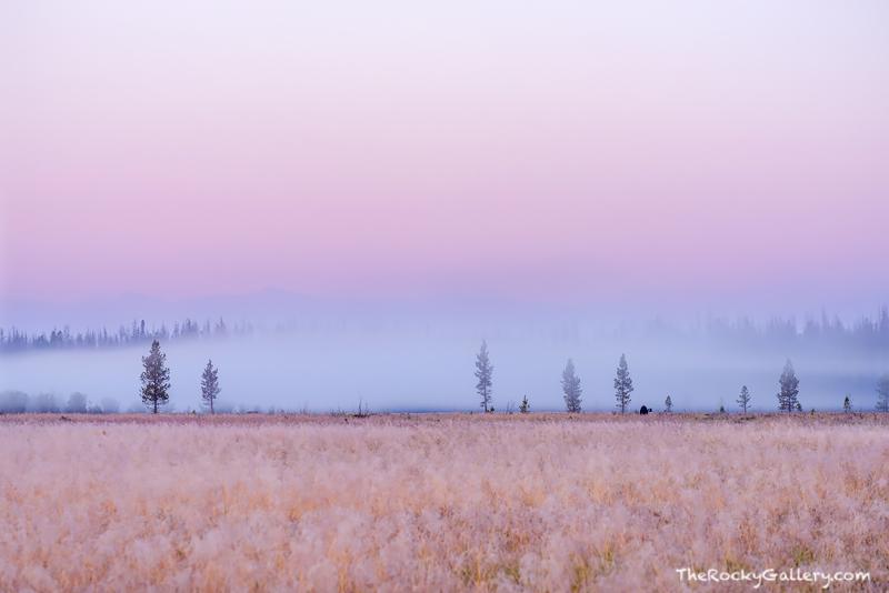 Colorado, Rocky Mountain National Park,RMNP,Grand Lake, Kawuneeche Valley,Moose,Fog,Sunrise,Photography,Landscape,Valley,Trail Ridge, photo