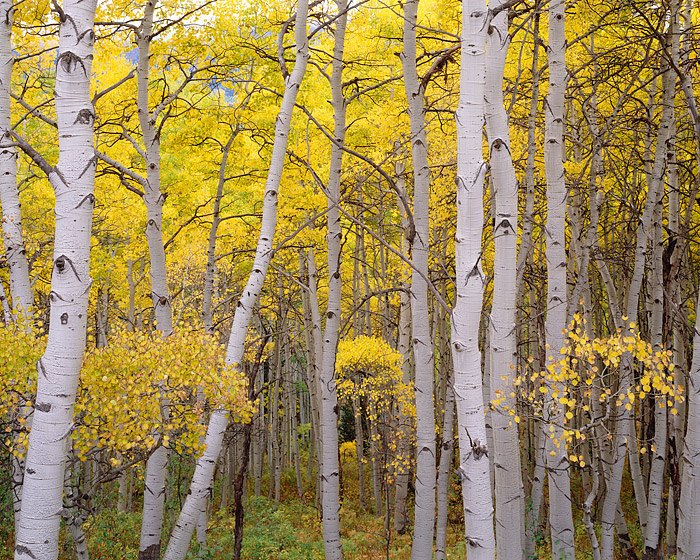 Crested Butte, Fall Color, Aspens, Kebler Pass, Mountains, Gunnison, photo