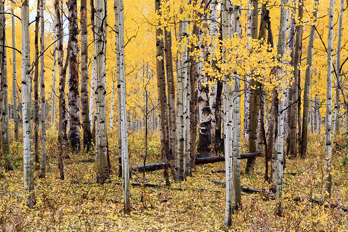 Kebler Pass, Crested Butte, Colorado, Fall, Aspens, Autumn, photo