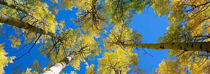 Kebler Pass, Fall, Crested Butte, Colorado, Aspens, photo