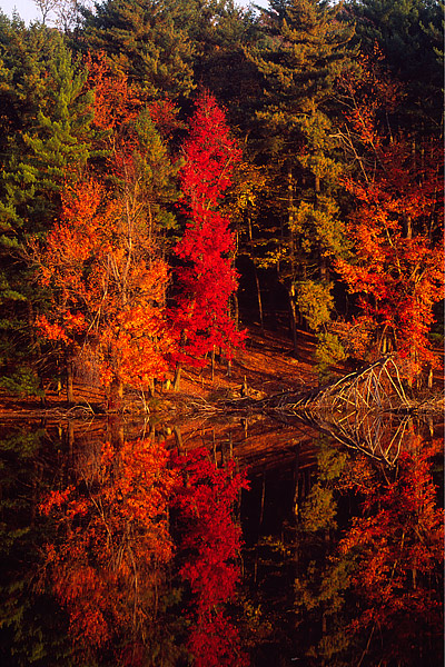 Fall Color reflects in Lake Kanawauke in Harriman State Park. Harriman State Park is located in the Hudson Valley region of New...