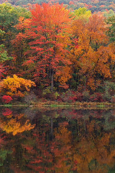Harriman State Park, Sugar Maples, New York, Fall Color, Hudson Valley, photo