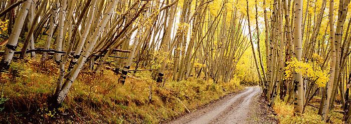 Last Dollar Road, Telluride, Ridgway, San Juans, Colorado, Aspen, Fall, photo