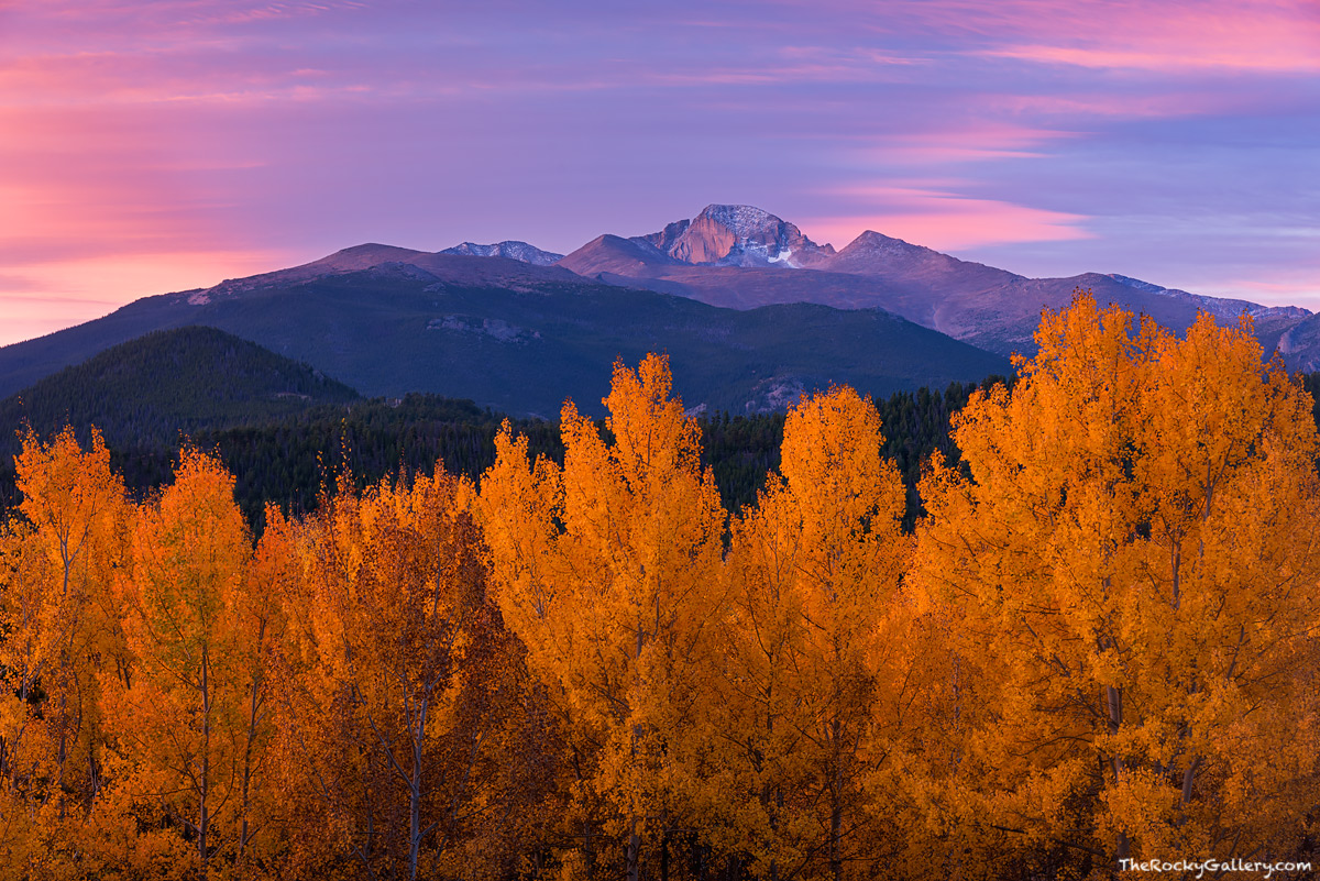 Longs Peak,Moraine Park,Elk,Rut,Fall,Autumn,Estes Park,Rocky Mountain National Park,Colorado,Landscape,Photography,Sunrise,The Diamond,Aspen,Trees,Golden, photo