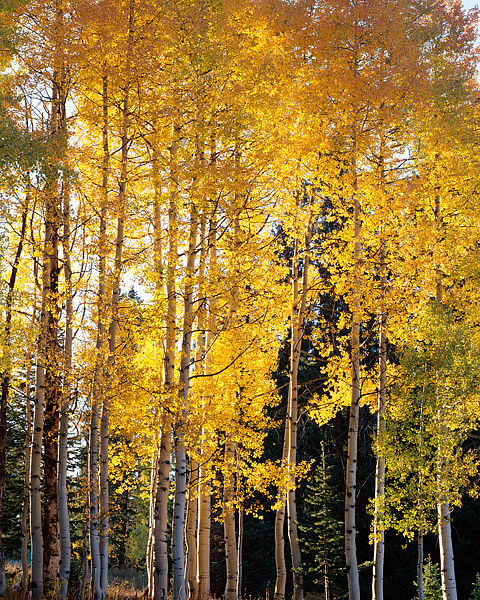 Lost Lake, Crested Butte, Kebler Pass, Gunnison, Aspens, Fall Color, West Elk Mountains, photo