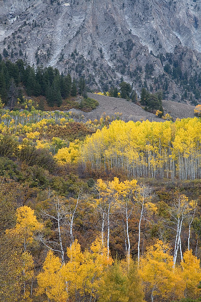 Colorado, Crested Butte, Kebler Pass, Marcellina Mountain, Fall, Aspens, Autumn, photo