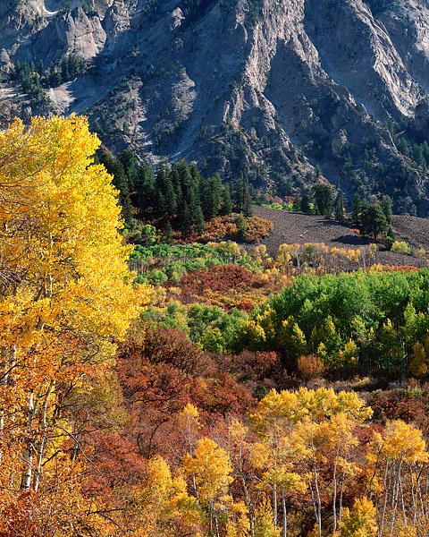 Crested Butte, Colorado, Fall color, Aspens, Kebler Pass, photo
