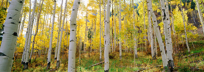Aspen, Colorado, White River National Forest, Fall, Maroon Bells, photo