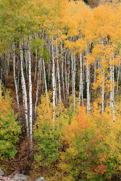McClure Pass, Aspens, Fall Color, Colorado, Marble, photo