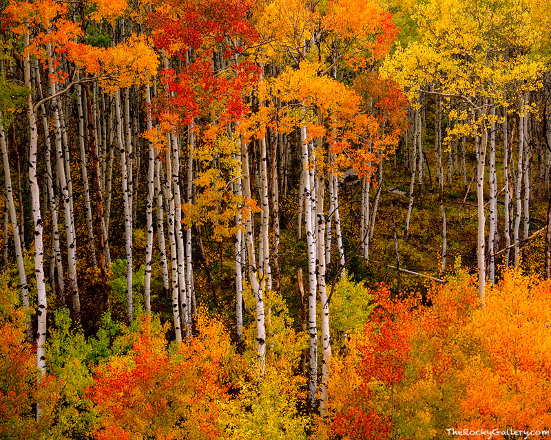 McClure Pass, Aspen, Redstone, Crested Butte, Fall Color, Marble, White River National Forrest, Crystal River,Landscape,Photography,Trees,Autumn, photo