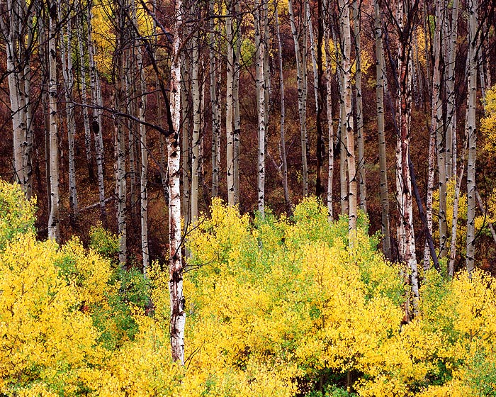 Colorado, Aspens, Fall, McClure Pass, photo
