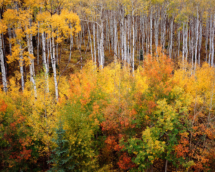 Colorado, Aspen, McClure Pass, Marble, Autumn, photo