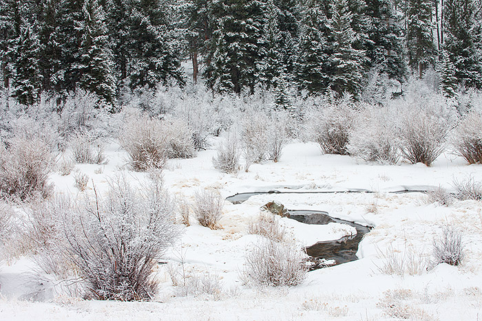 Rocky Mountain National Park,Colorado,Mill Creek,winter,bear lake road,hollowell park,snow,trees,water,willows, photo