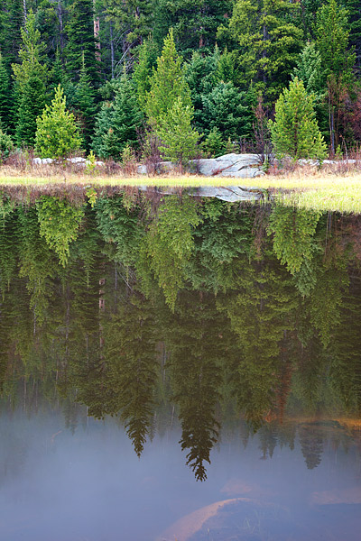Rocky Mountain National Park, Colorado, Cub Lake, Moraine Park, Fog, Pines, photo